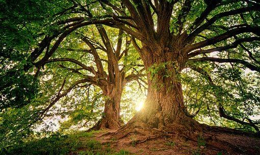 Ki Adam Etz haSadeh – L'uomo è un albero del campo